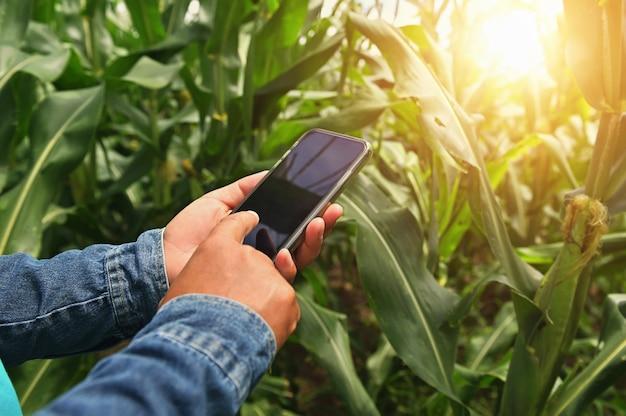 Agricoltore utilizzando l'analisi della tecnologia mobile per piantare mais in fattoria. concetto di agricoltura