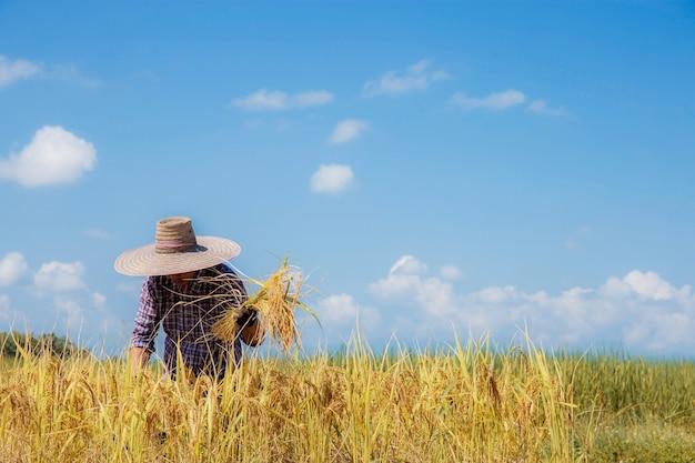Coltivatore che utilizza una falce per mietere nei campi con cielo blu.