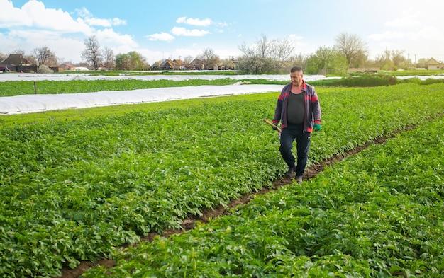 Un agricoltore cammina attraverso un campo di piantagione di patate dopo aver rimosso l'agrofibre spunbond