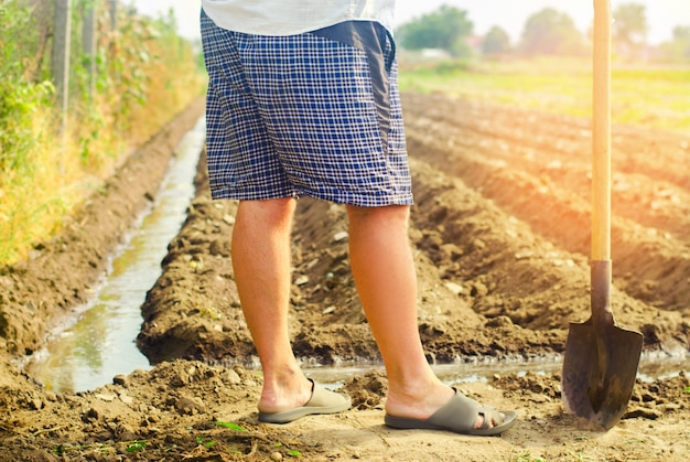 Agricoltore che innaffia le colture agricole, la campagna, l'irrigazione, l'innaffiatura naturale. l'agricoltura.