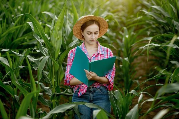 L'agricoltore con una cartella si trova in un campo di mais e controlla la crescita delle verdure. agricoltura - produzione alimentare, concetto di raccolta.
