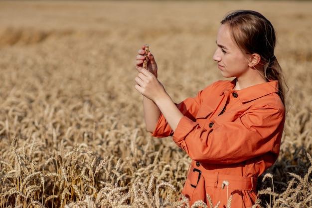 Coltivatore, con, compressa, e, provetta, ricerca, pianta, in, frumento, field., agricoltura, e, raccolta, concept. attività agro.