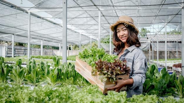 La donna dell'agricoltore raccoglie un'insalata di insalata biologica vegetale da una fattoria idroponica