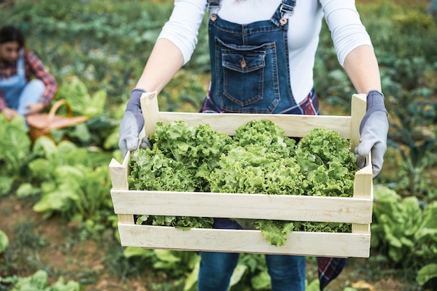 Donna del coltivatore che tiene scatola di legno con lattuga biologica fresca