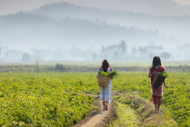 Gli agricoltori stanno camminando verdure biologiche nelle aree rurali.