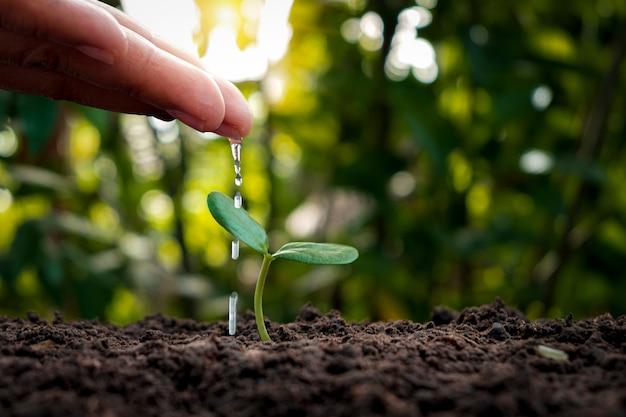 Gli agricoltori stanno innaffiando le piccole piante a mano con il concetto della giornata mondiale dell'ambiente.