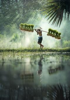 Gli agricoltori coltivano riso nella stagione delle piogge.