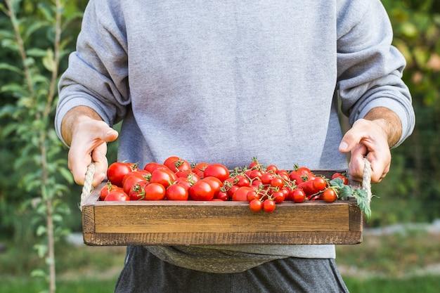 Agricoltori che tengono i pomodori freschi. alimenti biologici sani