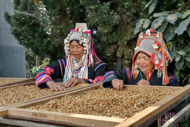 Agricoltori che selezionano i chicchi di caffè arabica coltivati negli altopiani settentrionali di chiang mai in thailandia.