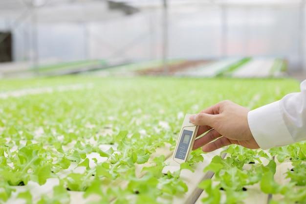 Gli agricoltori usano il termometro per controllare la qualità dell'acqua utilizzata per l'allevamento delle verdure. controllo rigoroso delle verdure in azienda. l'uomo d'affari esamina la qualità delle verdure biologiche in fattoria dal termometro.