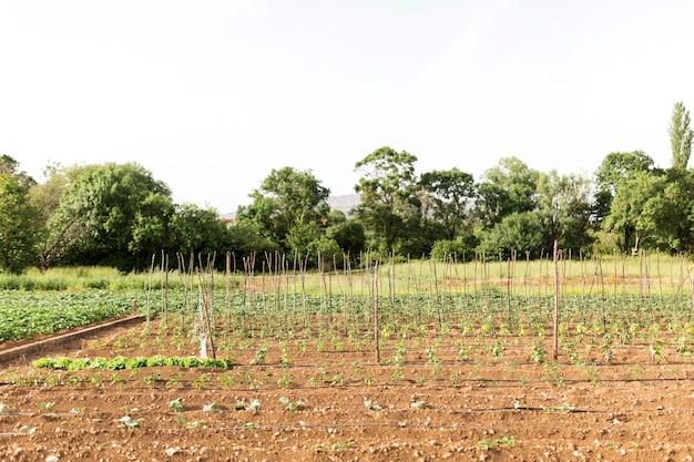 Concetto di agricoltura con piante