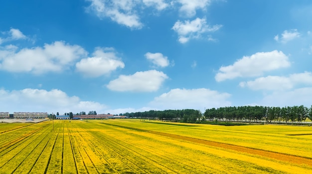 Terreni coltivati sotto il cielo blu e nuvole bianche