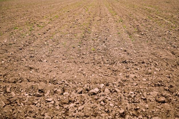 Terreno agricolo preparato per la coltivazione