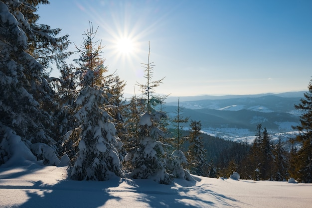 Affascinante paesaggio soleggiato di una foresta invernale situata su un pendio innevato in una gelida giornata invernale di sole. la fine di una vacanza in una stazione sciistica