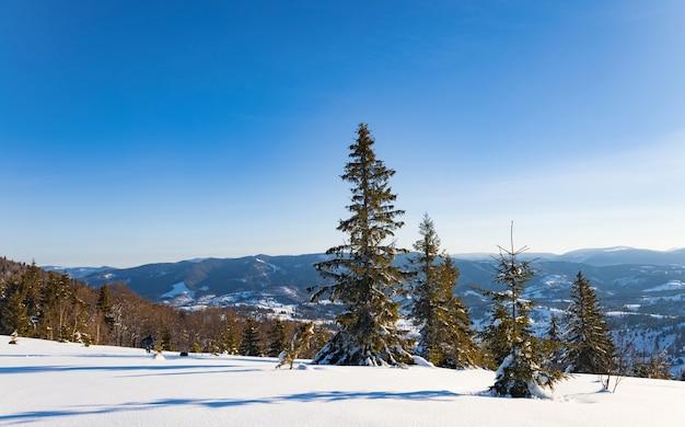 Affascinante paesaggio soleggiato di una foresta invernale