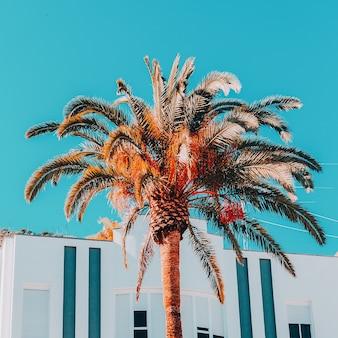 Contenuti da spiaggia di moda. posizione tropicale delle palme