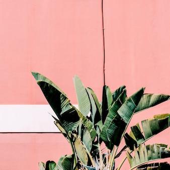 Contenuti di moda. pianta sul rosa. atmosfera verde tropicale