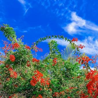 Fiori di moda. canarie. atmosfera di fioritura