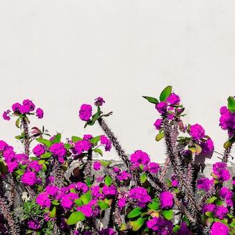 Fioritura minimale alla moda. fiori tropicali