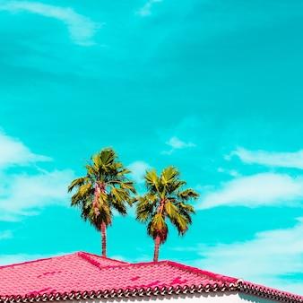 Vibrazioni da vacanza alla moda. mood palma e rosa