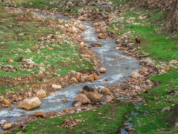 Fiume di montagna veloce. taglio attraverso un fiume di montagna in una verde vallata.