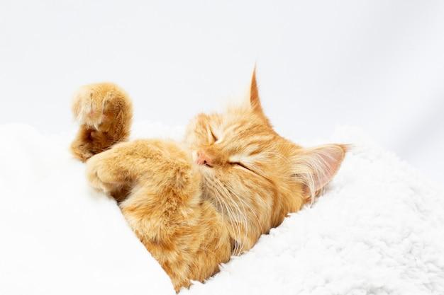 Grasso gatto rosso pigro con una grande pancia sdraiata sulla schiena su una coperta bianca sullo sfondo