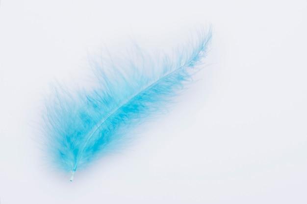 Piuma di un uccello blu su sfondo bianco