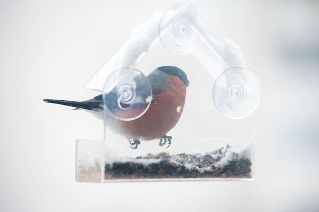 Nutrire gli uccelli in inverno