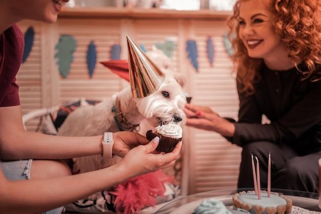 Alimentazione dei cani. proprietari di cani bianchi che ridono mentre li nutrono con cupcakes e festeggiano il compleanno