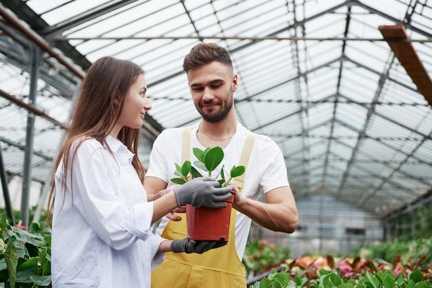 Provare gioia. coppia di fioristi al lavoro. ragazza con vaso con pianta verde.
