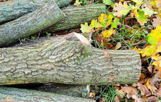 Alberi abbattuti in un prato, preparando legna da ardere per l'inverno