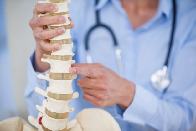 Modello femminile della colonna vertebrale della holding del medico