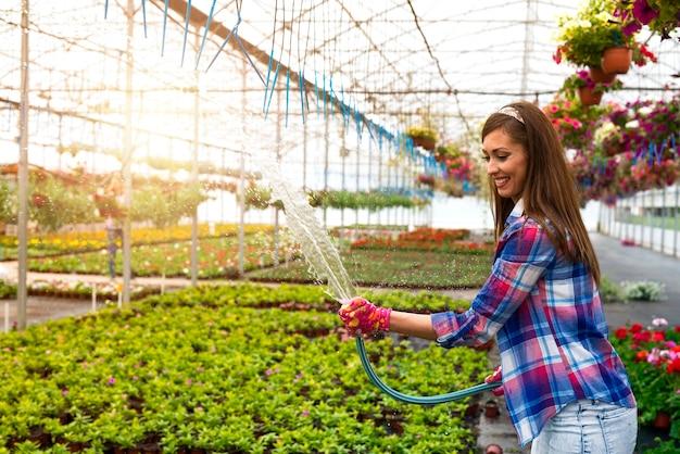 Fiorista femminile che tiene il tubo flessibile e innaffiare le piante in serra.