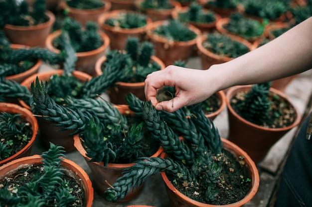 Giardiniere femminile che si prende cura delle piante in una pianta d'appartamento
