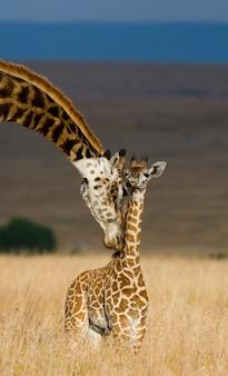 Giraffa femminile con un bambino nella savana.
