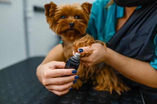 Toelettatore femminile che lucida gli artigli del simpatico cane, salone di toelettatura.