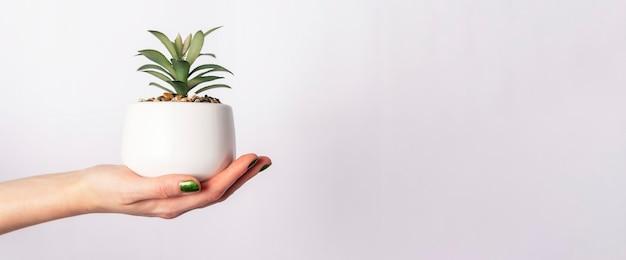 Mano femminile che tiene pianta verde in vaso su sfondo bianco. banner con copia spazio