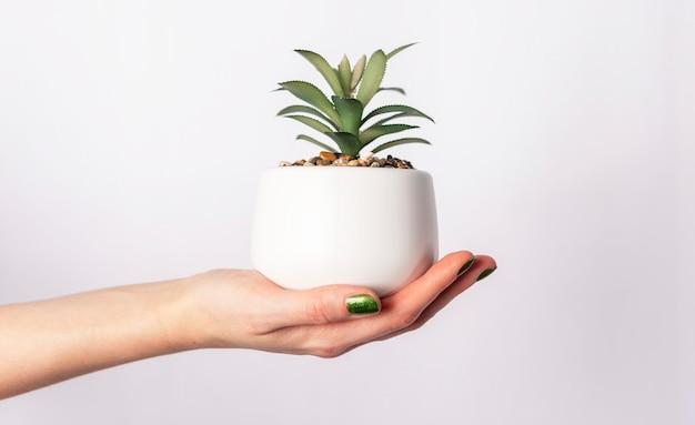 Mano femminile che tiene pianta verde in vaso su sfondo bianco
