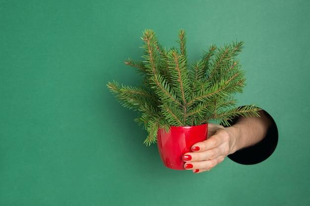 Mano femminile che tiene piccolo albero di natale creativo attraverso il foro rotondo nel libro verde.