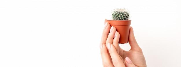 Mano femminile che tiene piccolo cactus