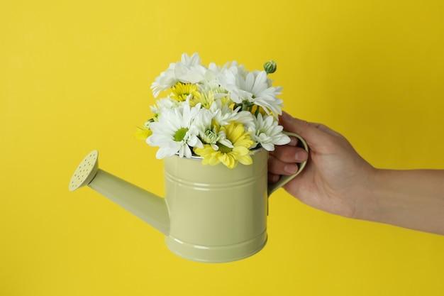 La mano femminile tiene l'annaffiatoio con i crisantemi su fondo giallo.