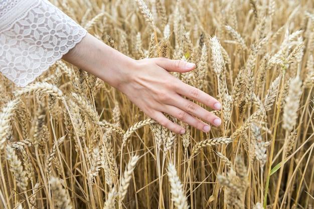 La femmina consegna il campo di grano, l'ora legale. concetto di raccolta