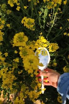 Si riflette una mano femminile con uno specchio retrò in miniatura nel campo dei fiori di campo gialli.
