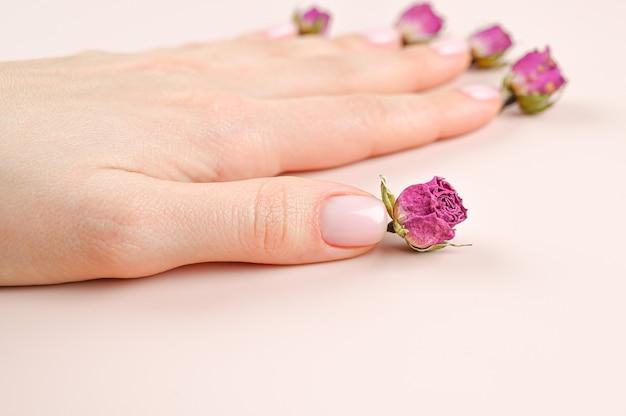 Mano femminile con unghie color pastello. mano di smalto rosa curata con boccioli di rosa sullo sfondo.