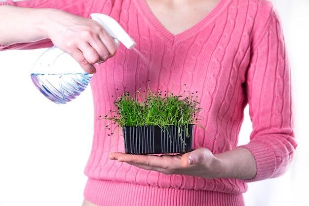 Mano femminile con spruzzi di irrigazione microgreens sulla superficie bianca