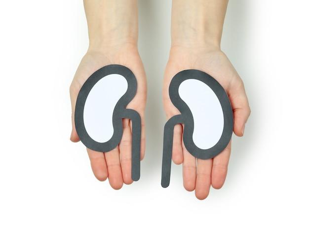 Le mani femminili tengono i reni decorativi, isolati su fondo bianco