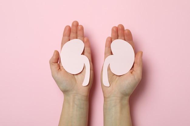 Le mani femminili tengono i reni di carta sul rosa
