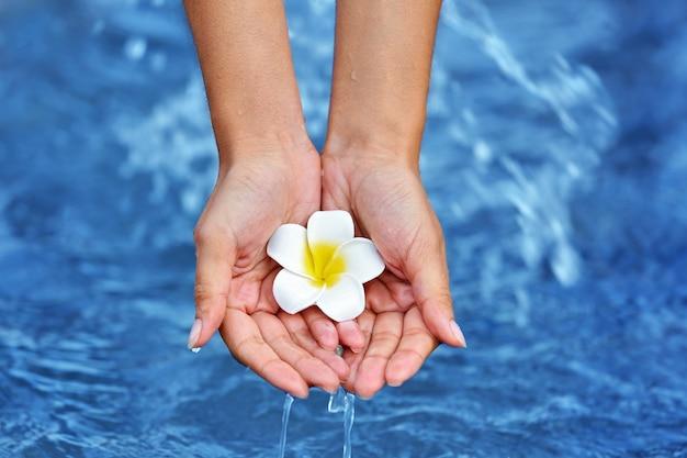 Mani femminili che tengono fiore e toccano l'acqua