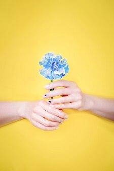 Mani femminili che tengono un fiore di garofano blu su un giallo