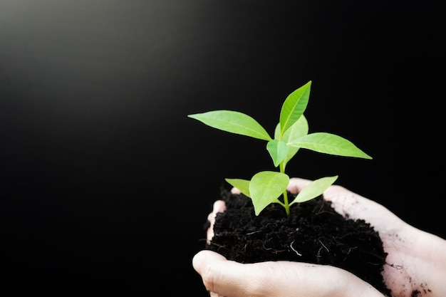 Mani femminili che tengono la pianta del germoglio o la piantina dell'albero verde con terreno nero.